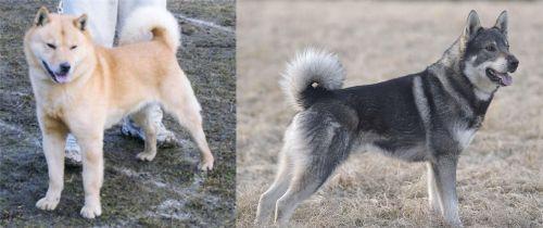 Hokkaido vs Jamthund