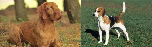 Hungarian Wirehaired Vizsla vs English Foxhound