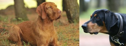 Hungarian Wirehaired Vizsla vs Lithuanian Hound