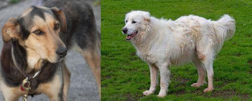 Huntaway vs Abruzzenhund