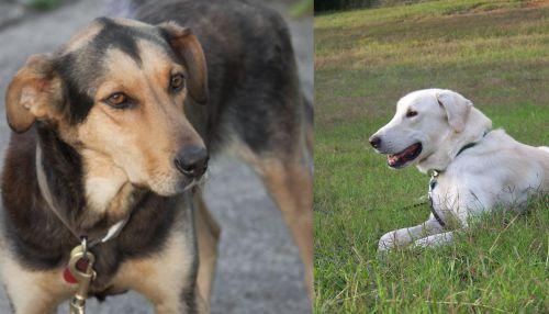 Huntaway vs Akbash Dog