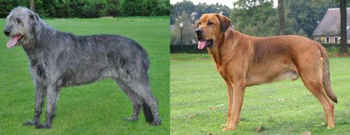 Irish Wolfhound vs Broholmer