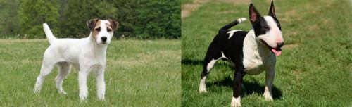 Jack Russell Terrier vs Bull Terrier Miniature