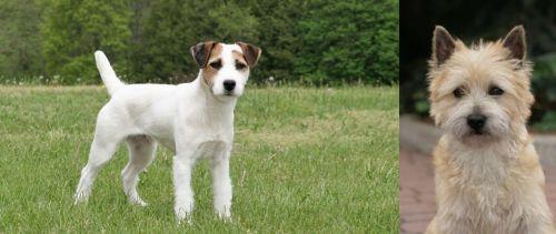 Jack Russell Terrier vs Cairn Terrier