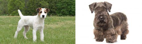 Jack Russell Terrier vs Cesky Terrier