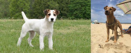 Jack Russell Terrier vs Fell Terrier