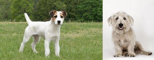 Jack Russell Terrier vs Glen of Imaal Terrier