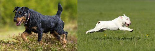Jagdterrier vs Bull Terrier