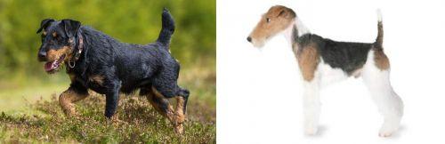Jagdterrier vs Fox Terrier