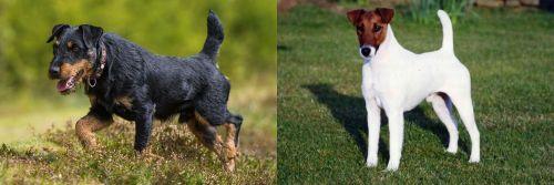 Jagdterrier vs Fox Terrier (Smooth)
