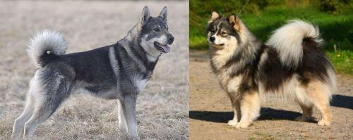 Jamthund vs Finnish Lapphund