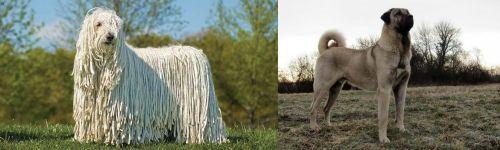 Komondor vs Kangal Dog