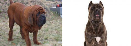 Korean Mastiff vs Cane Corso
