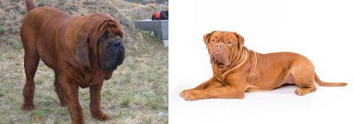 Korean Mastiff vs Dogue De Bordeaux