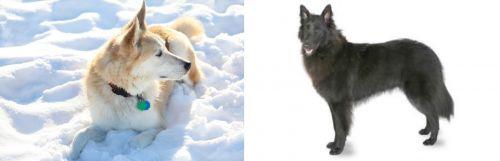 Labrador Husky vs Belgian Shepherd