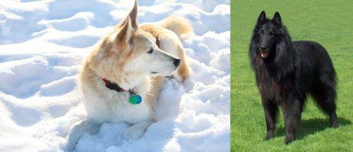 Labrador Husky vs Belgian Shepherd Dog (Groenendael)