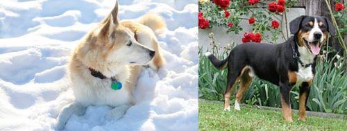 Labrador Husky vs Entlebucher Mountain Dog