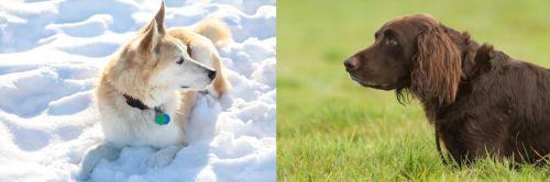Labrador Husky vs German Longhaired Pointer