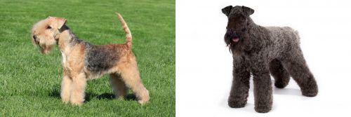 Lakeland Terrier vs Kerry Blue Terrier