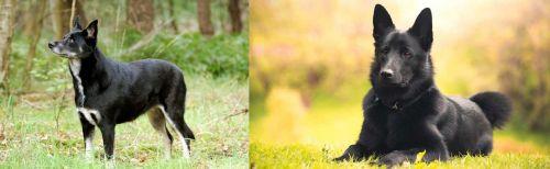 Lapponian Herder vs Black Norwegian Elkhound