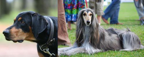 Lithuanian Hound vs Afghan Hound