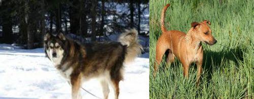 Mackenzie River Husky vs Africanis