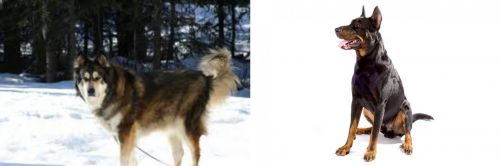 Mackenzie River Husky vs Beauceron