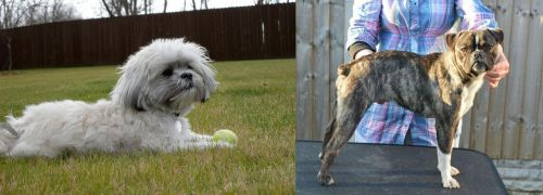 Mal-Shi vs Fruggle