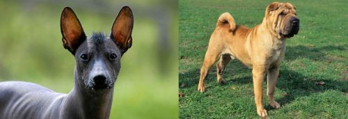 Mexican Hairless vs Chinese Shar Pei