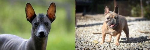 Mexican Hairless vs French Bulldog