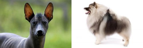 Mexican Hairless vs Keeshond