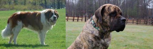 Moscow Watchdog vs American Mastiff