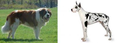 Moscow Watchdog vs Great Dane