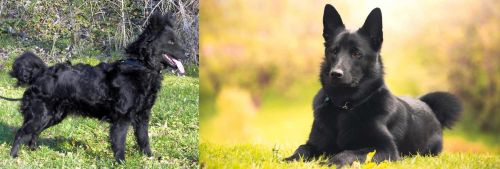 Mudi vs Black Norwegian Elkhound