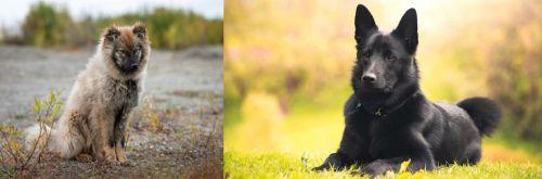 Nenets Herding Laika vs Black Norwegian Elkhound