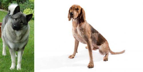 Norwegian Elkhound vs English Coonhound