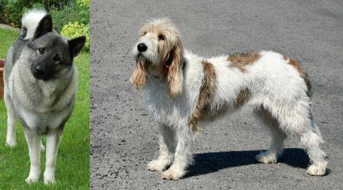 Norwegian Elkhound vs Grand Basset Griffon Vendeen