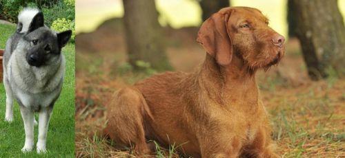 Norwegian Elkhound vs Hungarian Wirehaired Vizsla