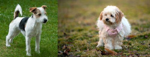 Parson Russell Terrier vs West Highland White Terrier