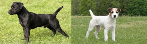 Patterdale Terrier vs Jack Russell Terrier