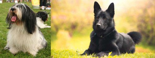 Polish Lowland Sheepdog vs Black Norwegian Elkhound