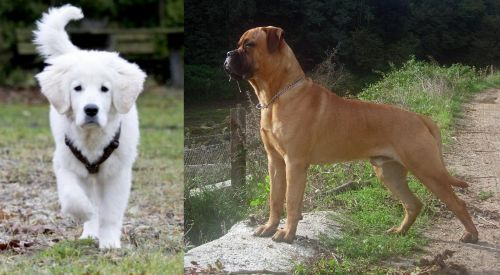 Polish Tatra Sheepdog vs Bullmastiff