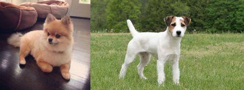 Pomeranian vs Jack Russell Terrier