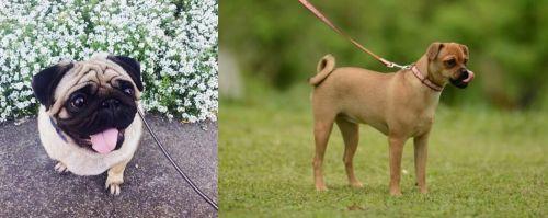 Pug vs Muggin