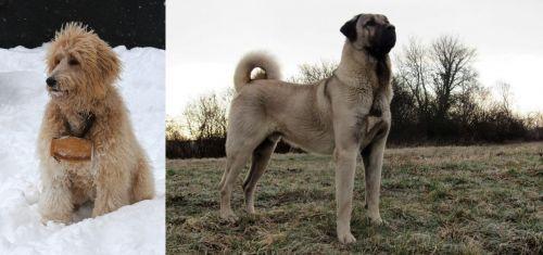 Pyredoodle vs Kangal Dog
