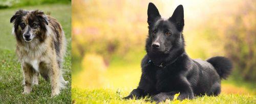 Pyrenean Shepherd vs Black Norwegian Elkhound