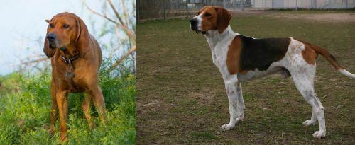 Redbone Coonhound vs Anglo-Francais de Petite Venerie