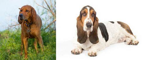 Redbone Coonhound vs Basset Hound