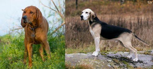 Redbone Coonhound vs Dunker
