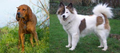 Redbone Coonhound vs Elo